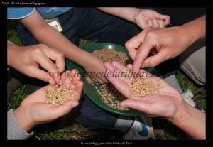 Tri du blé de la ferme pédagogique