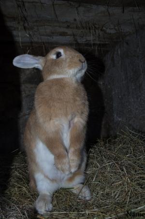 bonjour de la lapine