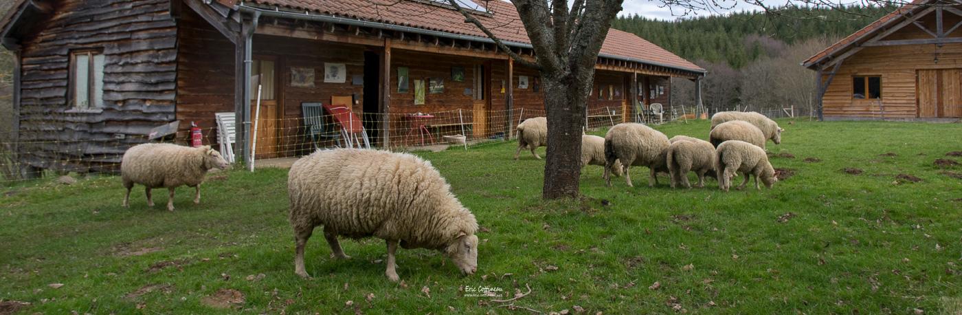 éco-paturage à la ferme